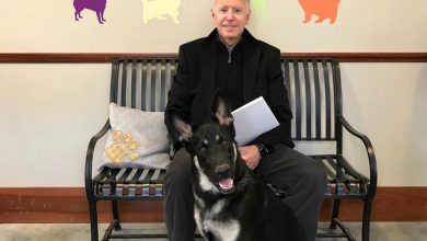 Photo of رئيس الامريكي  بايدن اصيب بكسر في قدمه  أثناء اللعب مع كلبه